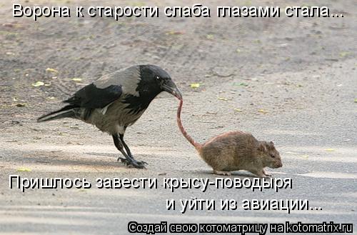 Котоматрица: Ворона к старости слаба глазами стала... Пришлось завести крысу-поводыря и уйти из авиации...
