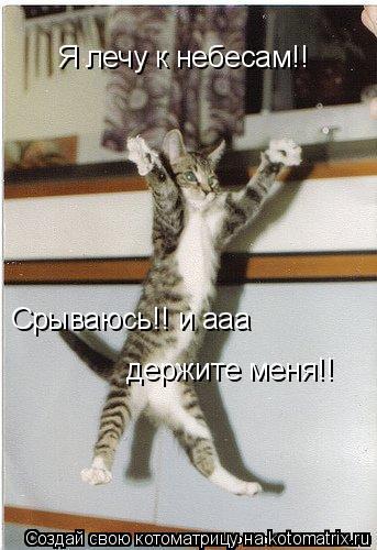 Котоматрица: Я лечу к небесам!! Срываюсь!! и ааа  держите меня!!
