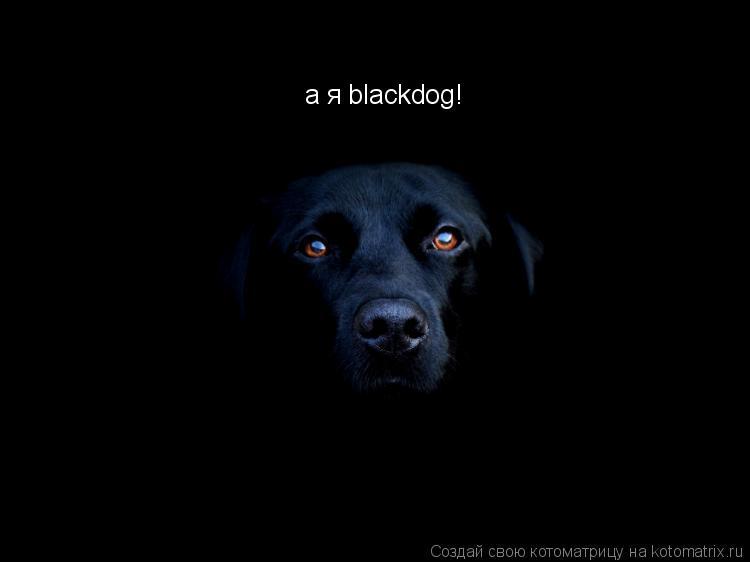 Котоматрица: а я blackdog!
