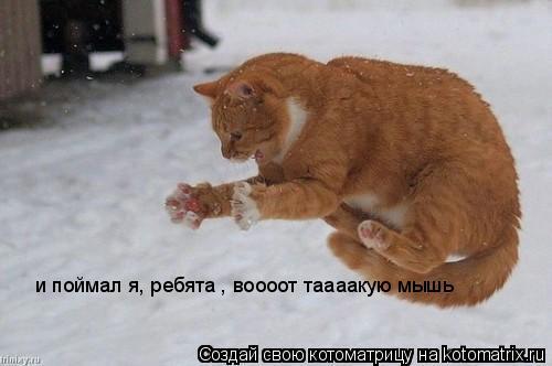 Котоматрица: и поймал я, ребята , воооот таааакую мышь