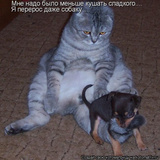 Котоматрица: Мне надо было меньше кушать сладкого.... Я перерос даже собаку.....