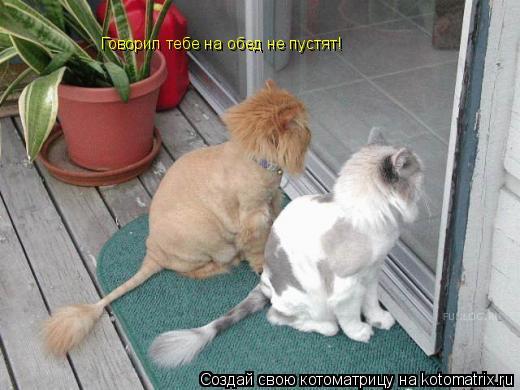 Котоматрица: Говорил тебе на обед не пустят!