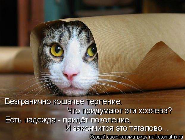 Котоматрица: Безгранично кошачье терпение. Что придумают эти хозяева? Есть надежда - придёт поколение, И закончится это тягалово...