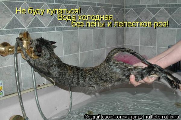 Котоматрица: Не буду купаться!  Вода холодная,  без пены и лепестков роз!