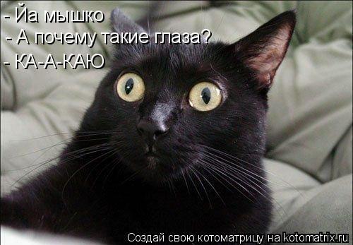 Котоматрица: - А почему такие глаза? - КА-А-КАЮ - Йа мышко