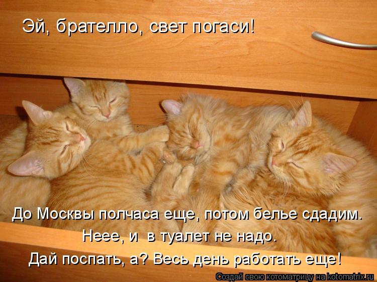 Котоматрица: Эй, брателло, свет погаси! До Москвы полчаса еще, потом белье сдадим. Неее, и  в туалет не надо.  Дай поспать, а? Весь день работать еще!