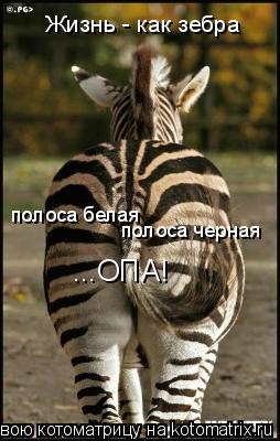 Котоматрица: Жизнь - как зебра полоса белая полоса черная ...ОПА!