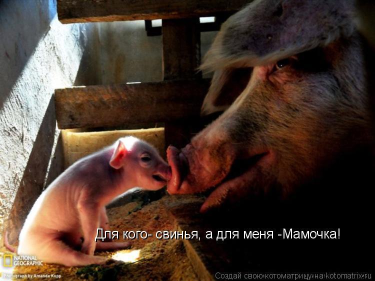 Котоматрица: Для кого- свинья, а для меня -Мамочка!