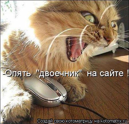 """Котоматрица: -Опять  """"двоечник""""  на сайте !"""