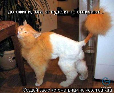 Котоматрица: до-ожили,кота от пуделя не отличают...