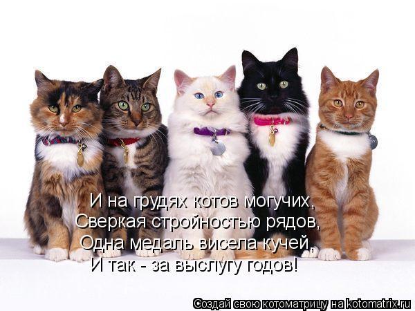 Котоматрица: И на грудях котов могучих, Сверкая стройностью рядов, Одна медаль висела кучей, И так - за выслугу годов!