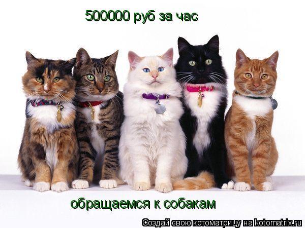 Котоматрица: 500000 руб за час обращаемся к собакам