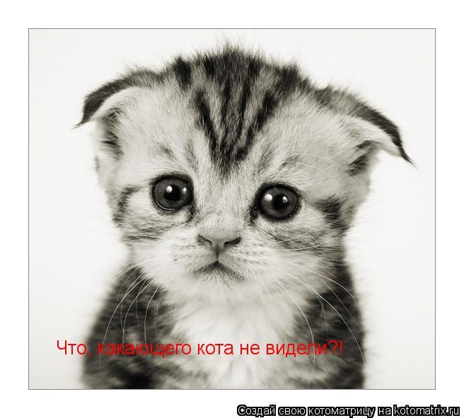 Котоматрица: Что, какающего кота не видели?!
