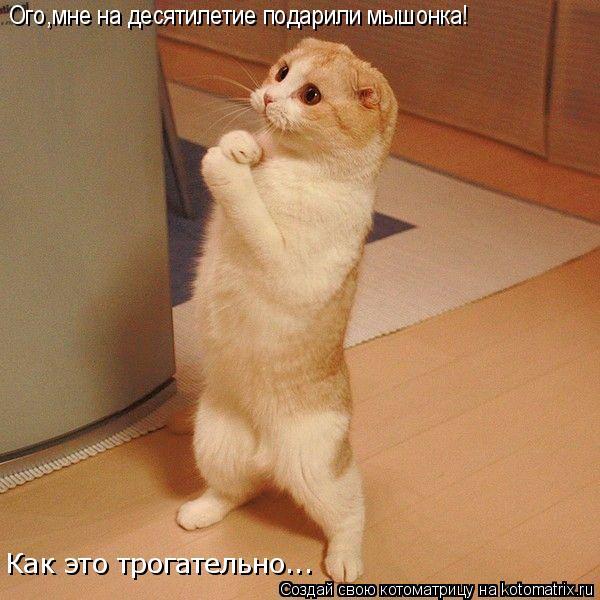Котоматрица: Ого,мне на десятилетие подарили мышонка! Как это трогательно...
