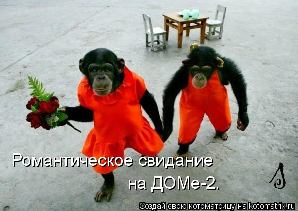 Котоматрица: Романтическое свидание на ДОМе-2.