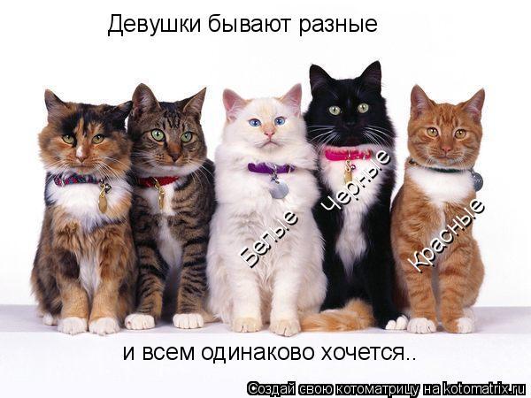 Котоматрица: Девушки бывают разные Черные Белые Красные и всем одинаково хочется..