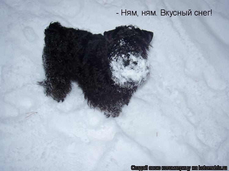 Котоматрица: - Ням, ням. Вкусный снег!