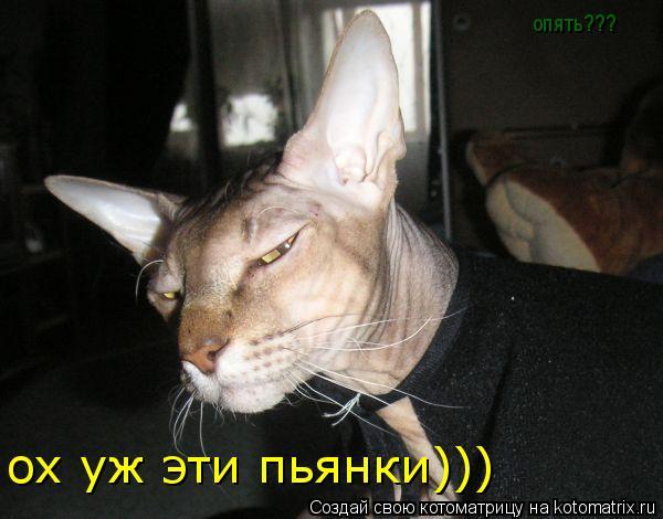 Котоматрица: ох уж эти пьянки))) опять???