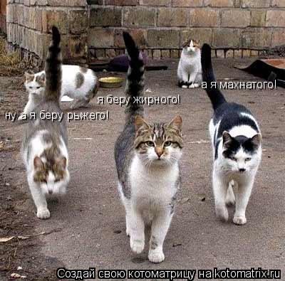 http://kotomatrix.ru/images/lolz/2009/03/23/WF.jpg