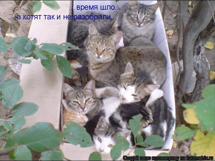 Котоматрица: ...время шло.... ....а котят так и не разобрали...
