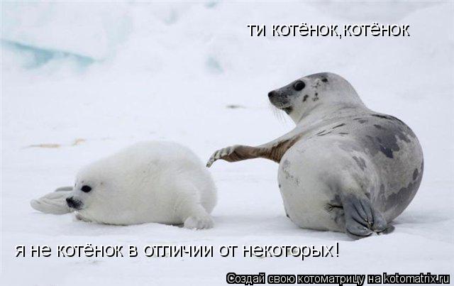 Котоматрица: ти котёнок,котёнок я не котёнок в отличии от некоторых!