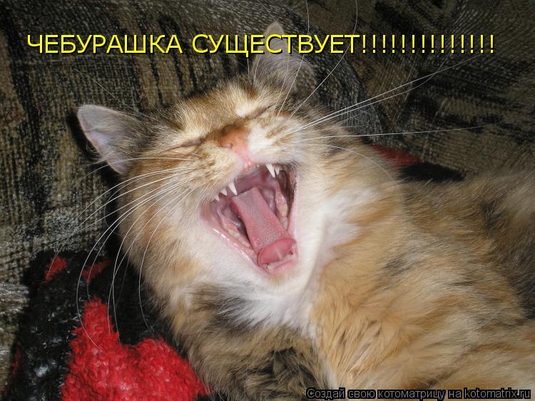Котоматрица: ЧЕБУРАШКА СУЩЕСТВУЕТ!!!!!!!!!!!!!!