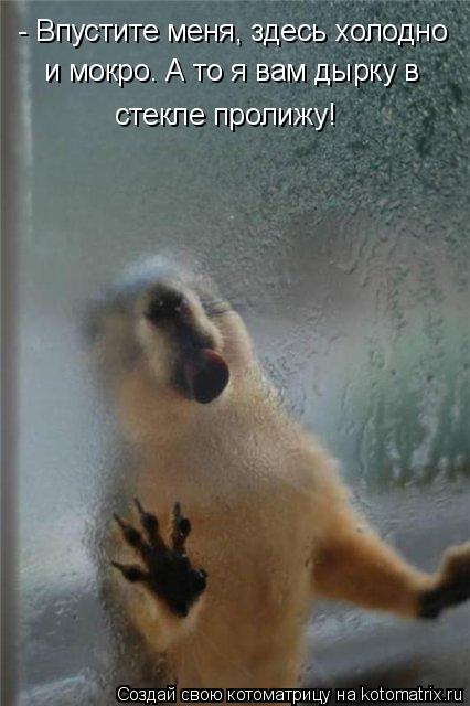 Котоматрица: - Впустите меня, здесь холодно и мокро. А то я вам дырку в  стекле пролижу!