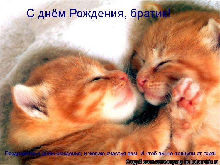 Котоматрица: С днём Рождения, братик! Поздравляю с днём рожденья, и желаю счастья вам. И чтоб вы не лопнули от горя!