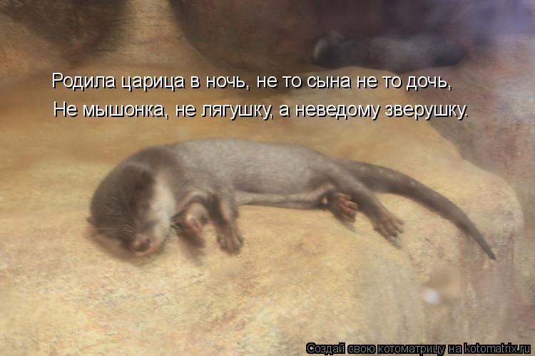 Котоматрица: Родила царица в ночь, не то сына не то дочь, Не мышонка, не лягушку, а неведому зверушку.