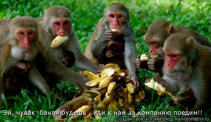 Котоматрица: Эй, чувак  банан будешь , иди к нам за компанию поедим!!