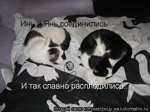 Котоматрица: Инь и Янь соединились И так славно расплодились...