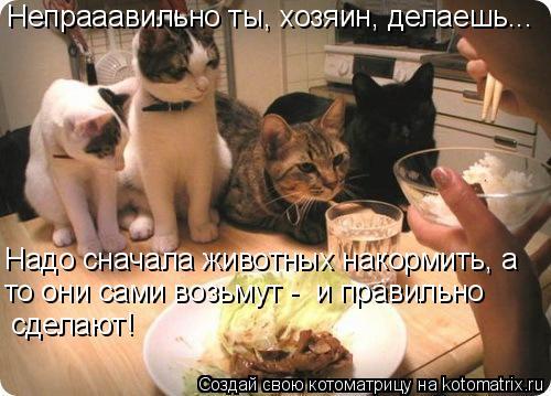 Котоматрица: Надо сначала животных накормить, а сделают! Непрааавильно ты, хозяин, делаешь... то они сами возьмут -  и правильно
