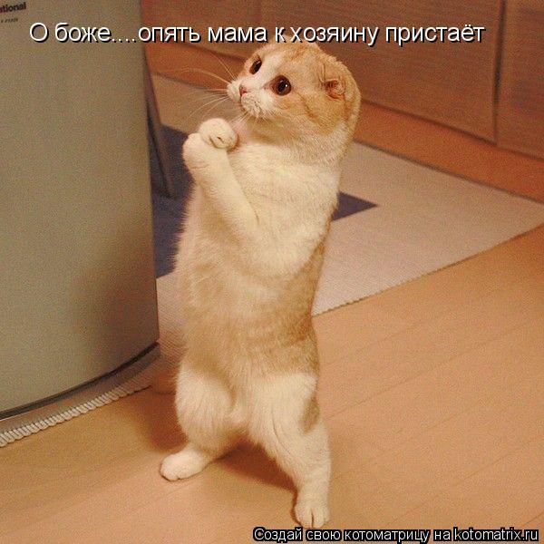 Котоматрица: О боже....опять мама к хозяину пристаёт