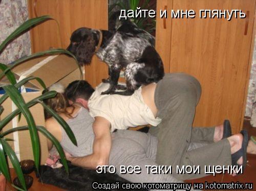 Котоматрица: дайте и мне глянуть это все таки мои щенки