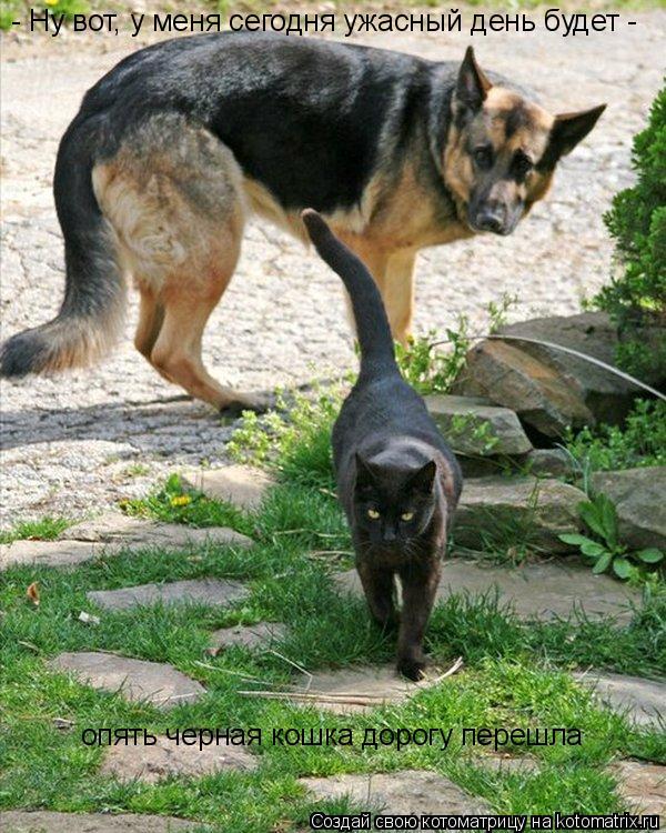 Котоматрица: - Ну вот, у меня сегодня ужасный день будет -  опять черная кошка дорогу перешла
