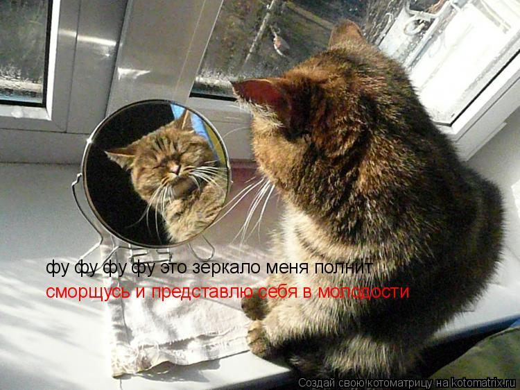 Котоматрица: фу фу фу фу это зеркало меня полнит сморщусь и представлю себя в молодости