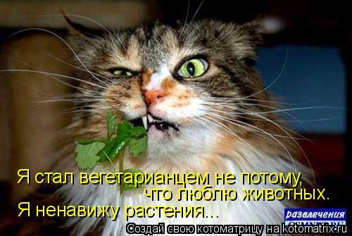 Котоматрица: Я стал вегетарианцем не потому, что люблю животных. Я ненавижу растения...