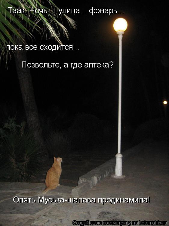 Котоматрица: Таак: Ночь..., улица... фонарь... пока все сходится... Позвольте, а где аптека? Опять Муська-шалава продинамила!
