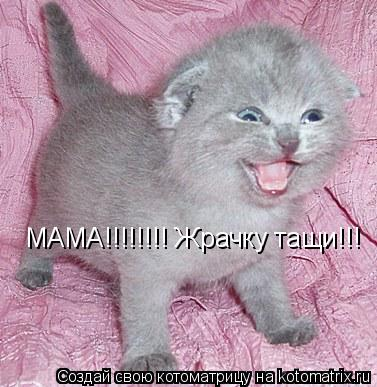 Котоматрица: МАМА!!!!!!!! Жрачку тащи!!!