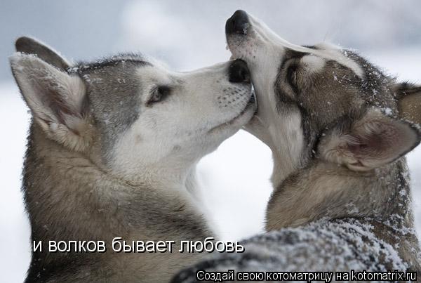 Котоматрица: и волков бывает любовь