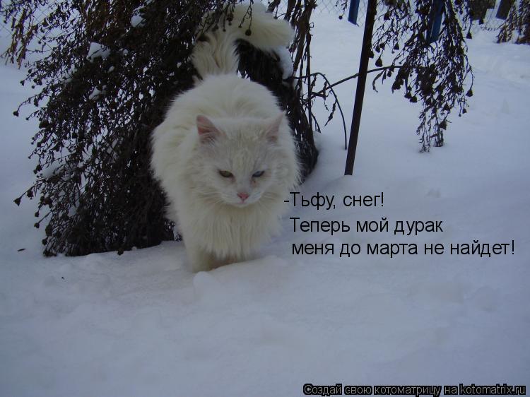Котоматрица: -Тьфу, снег!  Теперь мой дурак меня до марта не найдет!