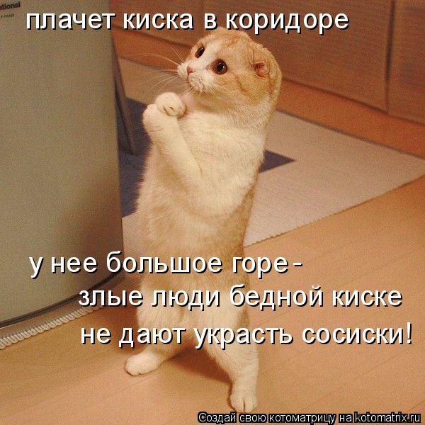 Котоматрица: плачет киска в коридоре у нее большое горе - злые люди бедной киске не дают украсть сосиски!