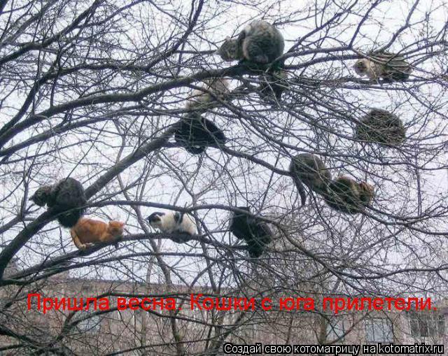 Котоматрица: Пришла весна. Кошки с юга прилетели.
