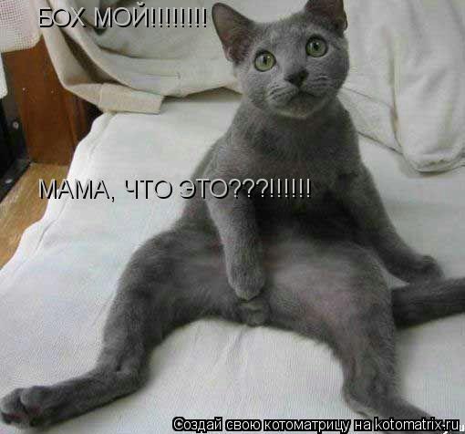 Котоматрица: БОХ МОЙ!!!!!!!! МАМА, ЧТО ЭТО???!!!!!!
