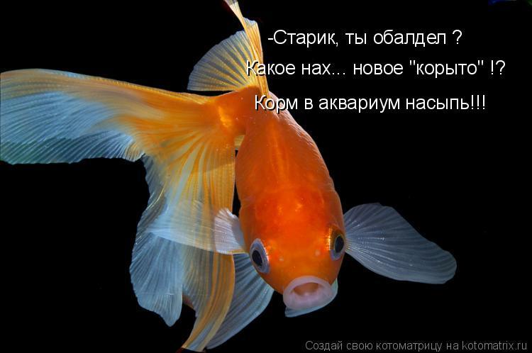 """Котоматрица: Корм в аквариум насыпь!!! -Старик, ты обалдел ? Какое нах... новое """"корыто"""" !?"""