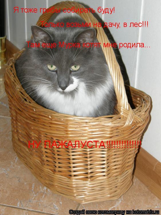 Котоматрица: Я тоже грибы собирать буду! Только возьми на дачу, в лес!!! Там еще Мурка котят мне родила... НУ ПАЖАЛУСТА!!!!!!!!!!!!!!
