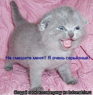 Котоматрица: Не смешите меня!! Я очень серьёзный!