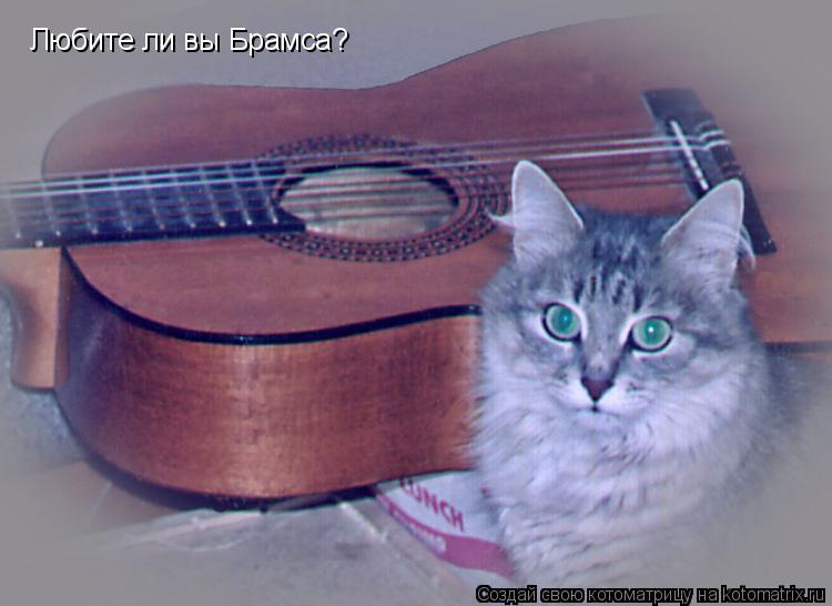 Котоматрица: Любите ли вы Брамса?