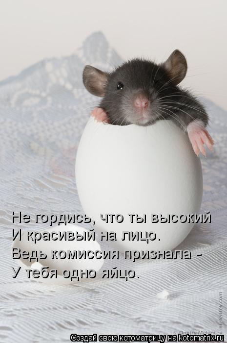 Котоматрица: Не гордись, что ты высокий  И красивый на лицо.  Ведь комиссия признала - У тебя одно яйцо.