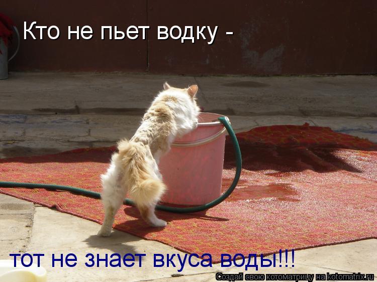 Котоматрица: Кто не пьет водку -  тот не знает вкуса воды!!!